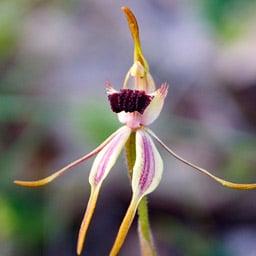 Must See Wildflowers – Kojonup WA - Wildflowers