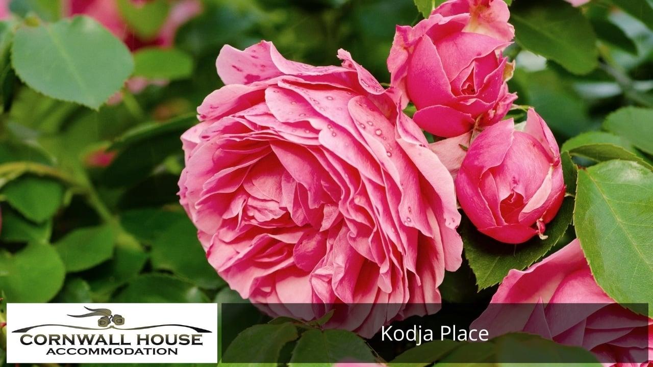 Kodja Place