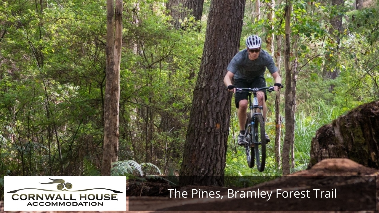 The Pines, Bramley Forest Trail