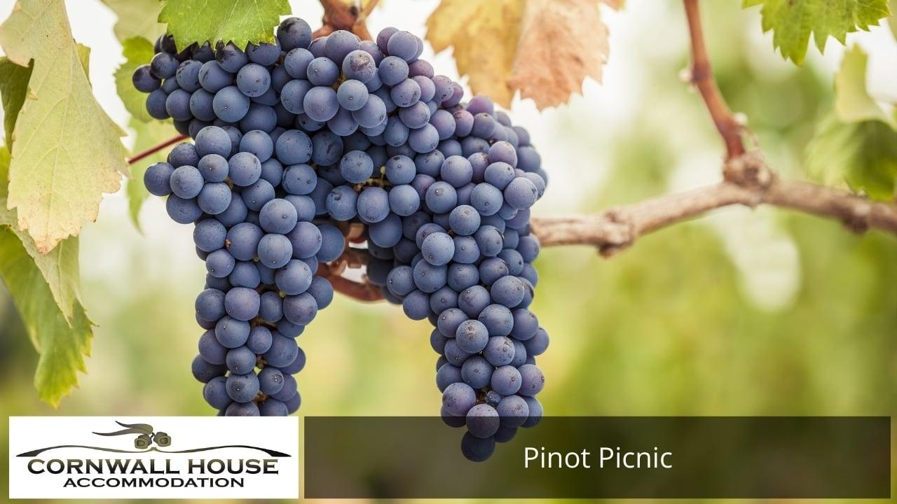 Pinot Picnic